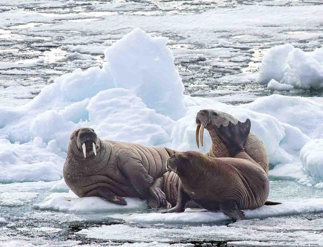Arctic Seminar Series