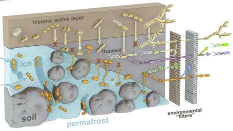Permafrost Microbiome Network