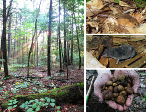 NH Forest