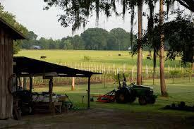 Caceres Blueberry Farms