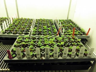 UNH Organic Seedlings