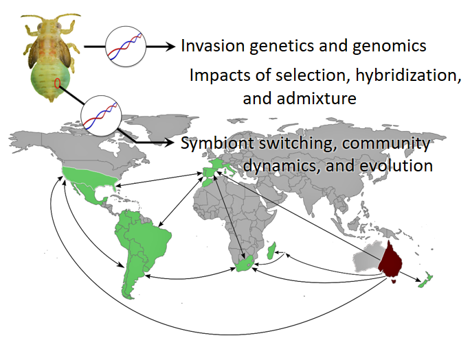 Global connectivity and invasion biology