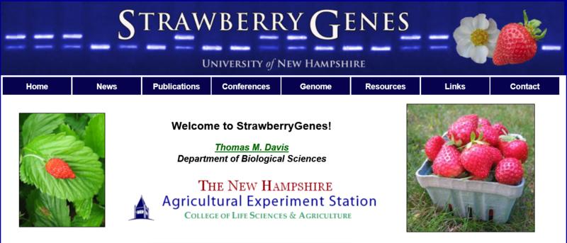 Strawberry Genes Banner