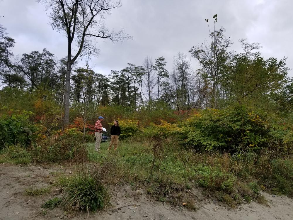 invasives on the White River