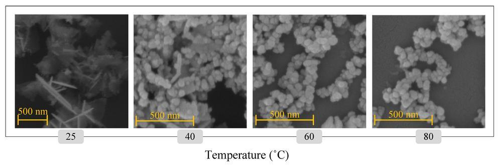 ZnO nanoparticles