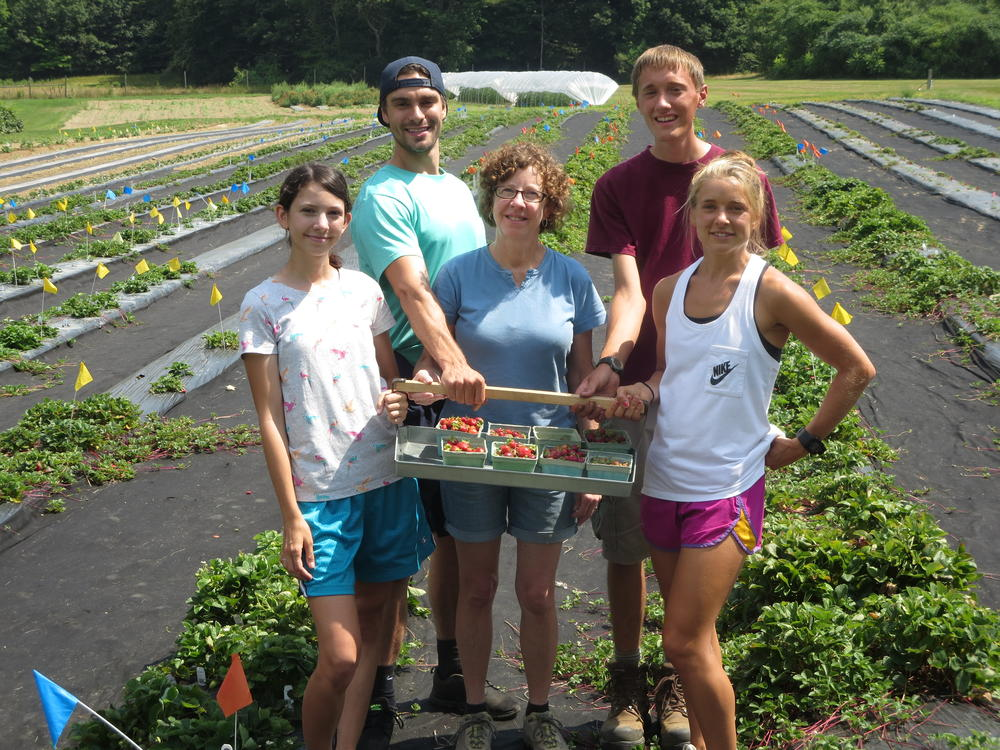 Strawberry field crew