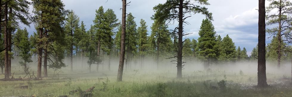 Leaf chemistry and tree ring sampling in an Arizona ponderosa pine forest