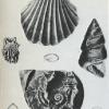 Fossil Sea-Shells