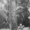 Mayan Stela