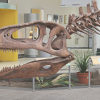 Patagonian Dinosaur Fossils