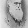 Portrait of Charles Darwin